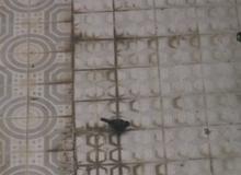 9. en la cárcel de palacio
